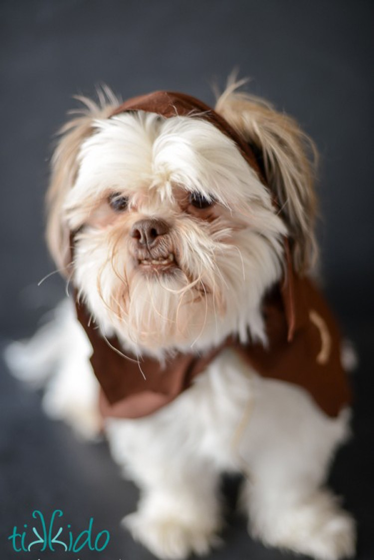 No Sew Ewok Dog Costume